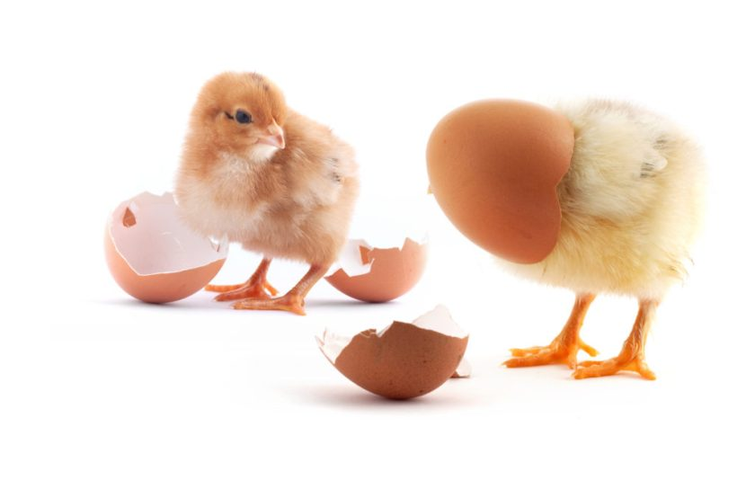 chicken and egg problem in fundraising
