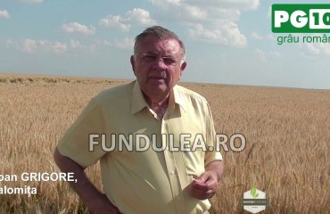 Fermierul Ioan Grigore despre graul romanesc PG 102, genetica Fundulea