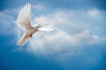 Doves Funeral Services  Funeral Cover Quotes