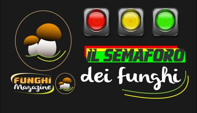 semaforo-funghi-1024x