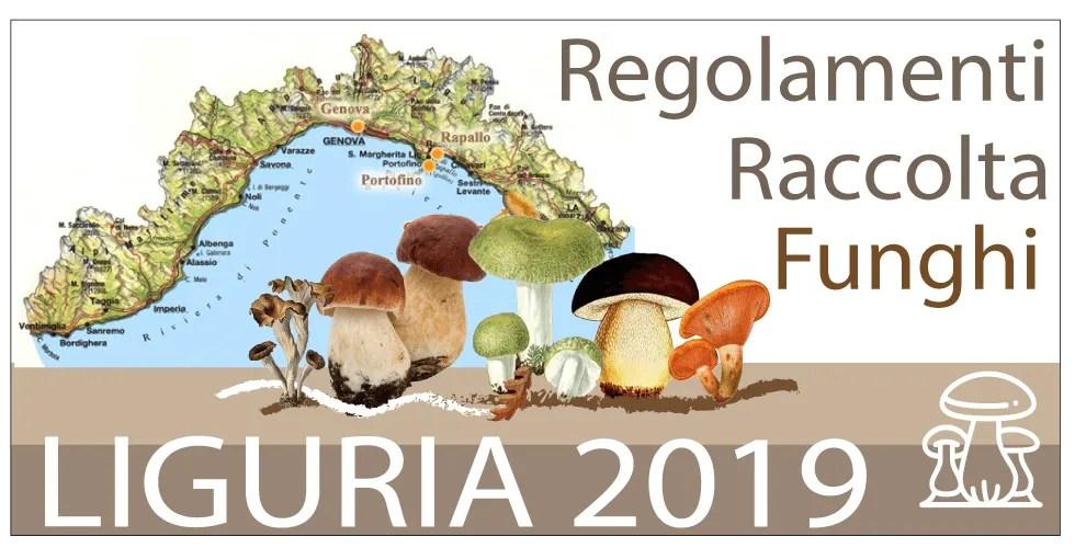 Calendario Funghi.Raccolta Funghi Liguria 2019 Regolamenti Funghimagazine It