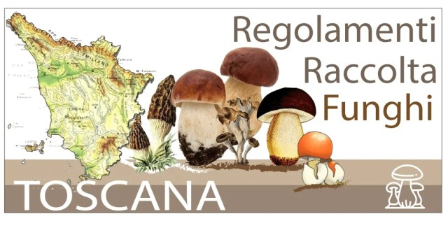 Raccolta funghi Toscana 2019 – funghimagazine it