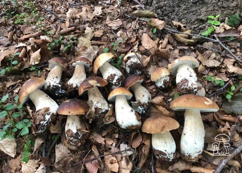 è proprio un bel fungo
