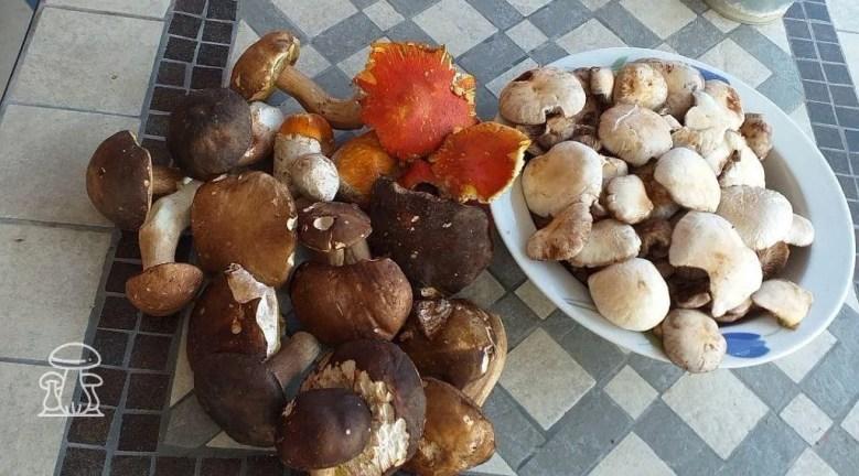 Mix funghi