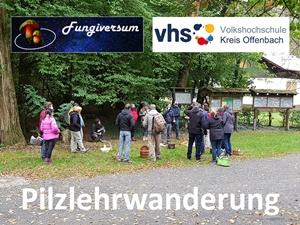 Read more about the article +++ ausgebucht +++   VHS-Pilzlehrwanderung in den artenreichen Wäldern Heusenstamms