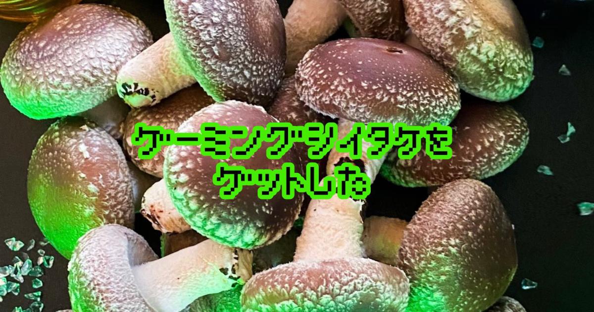 傘大又厚實的香菇…!「電競香菇」靜岡縣產的菌種香菇開始販售!