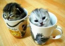 Котка в чая