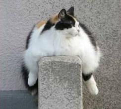 Котка - политик - мазна и оядена с пропаганда
