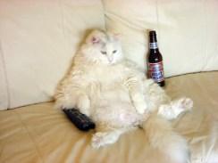 Котка - програмист (битов алкохолик)
