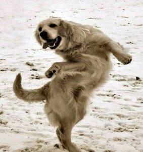 Куче танцува Габа (Gabba)
