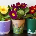 Aus alt macht neu – Blumentöpfe bemalen