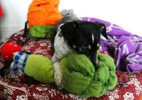 Hundekörbchen basteln aus Kissenbezügen