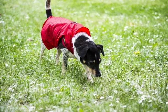 Regenjacke für Hunde selber nähen