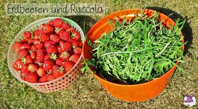 Aus dem Garten - Erdbeeren und Ruccola