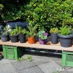 Zu Besuch im Garten