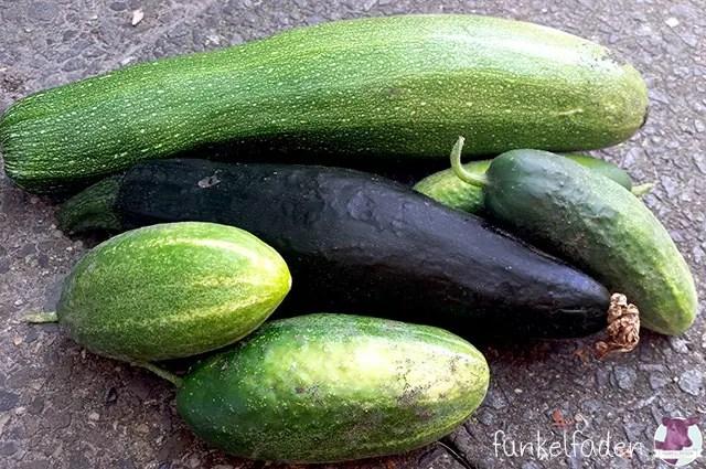 gartengl ck mit zucchini gurken und erbsen berlin garten natur und pflanzen berlin. Black Bedroom Furniture Sets. Home Design Ideas