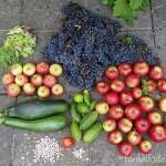 Herbsternte in der Gartenkolonie