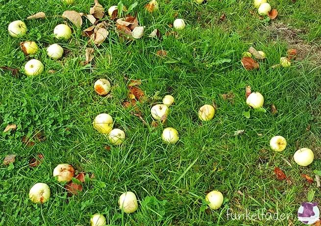 Äpfel sammeln als Fallobst in Berlin