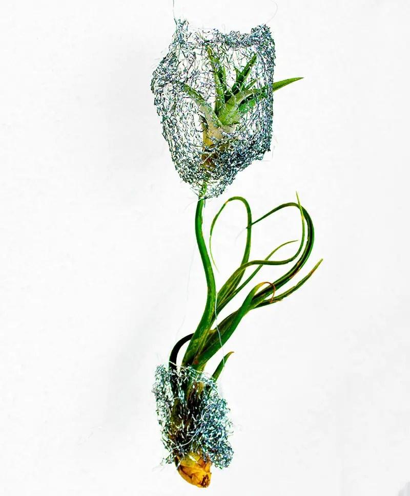 DIY mit Pflanzen