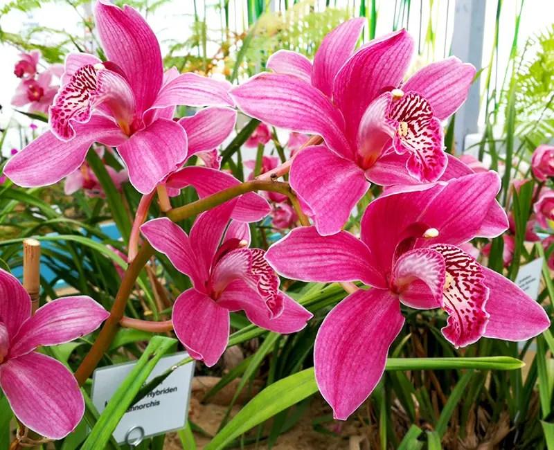 Orchideen auf der IGA Berlin