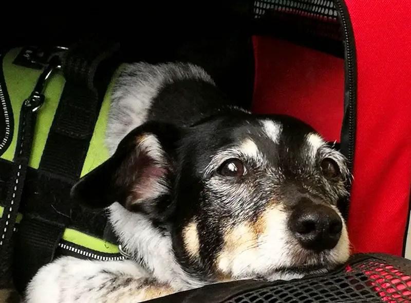 Hund in der Tasche Deutsche Bahn