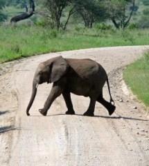 elephant-crossing-joke
