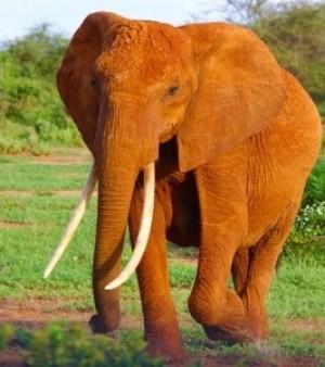 Elephant jokes for children