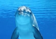 Dolphin Jokes for Everyone