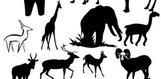 Wildlife Safari Jokes