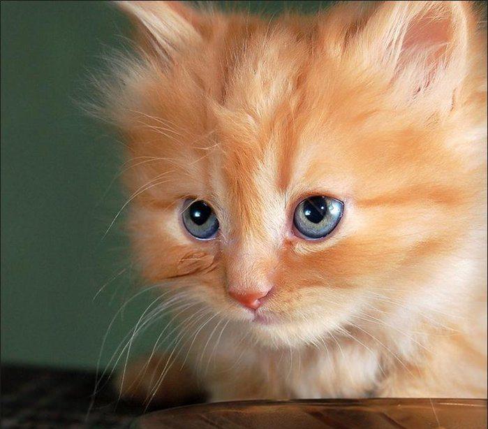 Cute Orange Kittens Wallpaper Картинки милых котят 30 фото