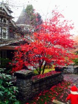 Gorgeous bright red tree