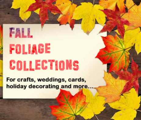 Fall Leaves in the Mail - Real Autumn Leaves
