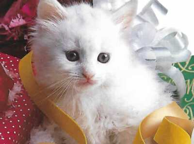 For a Precious Daughter - Christmas Card with Kitten