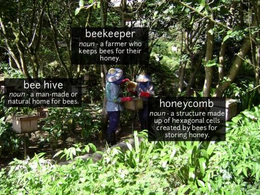 bee keeper vocabulary