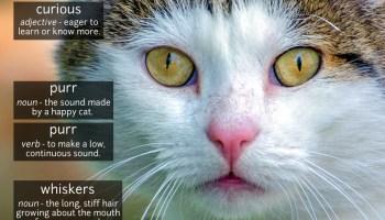 cat vocabulary