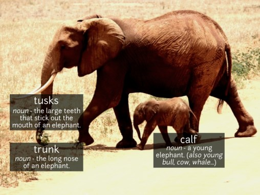 elephant vocabulary
