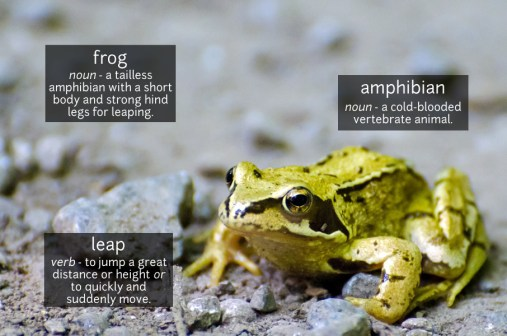 frog vocabulary