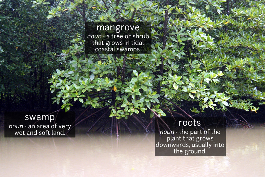 mangrove vocabulary