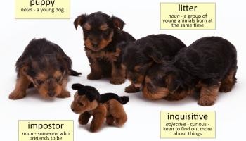 puppy vocabulary