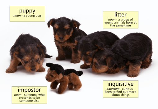 puppy vocabulary