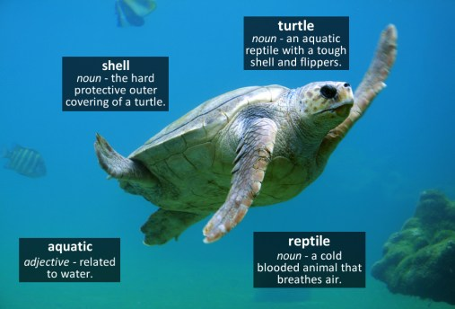 turtle vocabulary