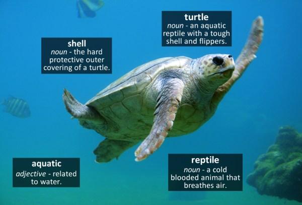 turtle vocabulary