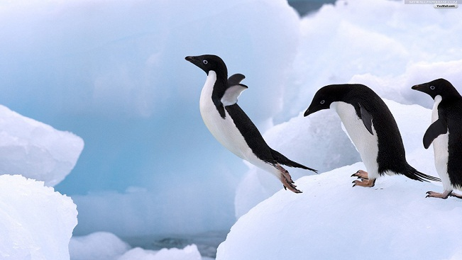 Wallpaper Love Couple Romantic Quotes 25 Cool Looking Penguin Pictures