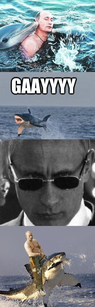 Vladimir Putin MEME   Funlexia - Funny Pictures
