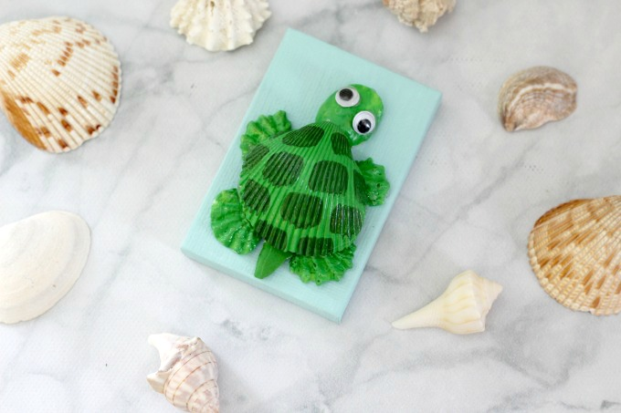 You can use shells of all shapes and sizes for your seashell turtle.