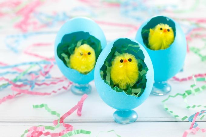 Easter chicks in eggs