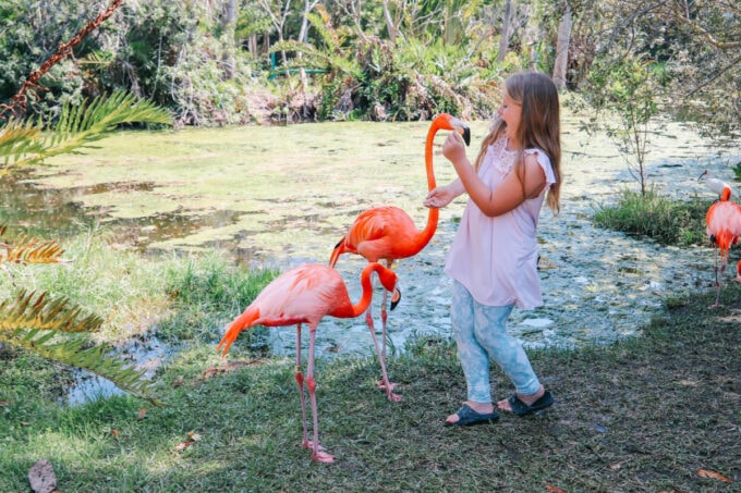 Little girl surprised by a flamingo