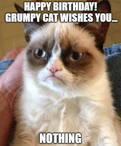 Cat Lady Birthday Meme : birthday, Funny, Birthday, Wishes, Lovers
