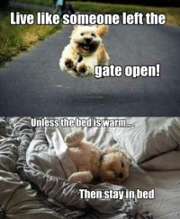 Stay in bed | Funny Pictures, Quotes, Memes, Jokes