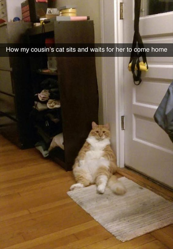 Funny Cat Sitting Funny Pictures Quotes Memes Jokes